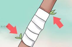 怎样用枝接法嫁接树 教你嫁接树步骤