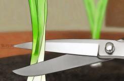 怎样在室内花盆里种植葱 一起学种植大葱步骤