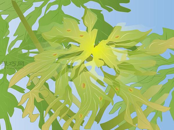 怎样照料木瓜树 11