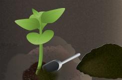 如何种木瓜 用种子种木瓜图解教程