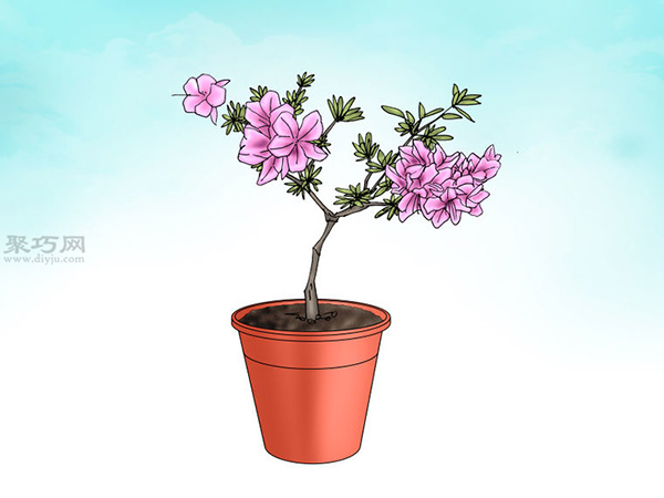 栽种杜鹃花教程图解 1