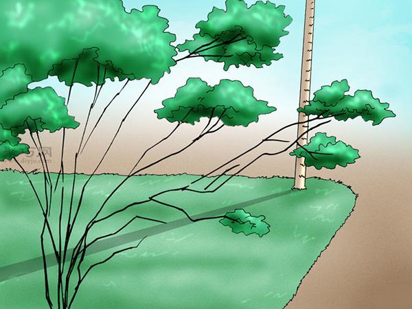 栽种杜鹃花教程图解 2