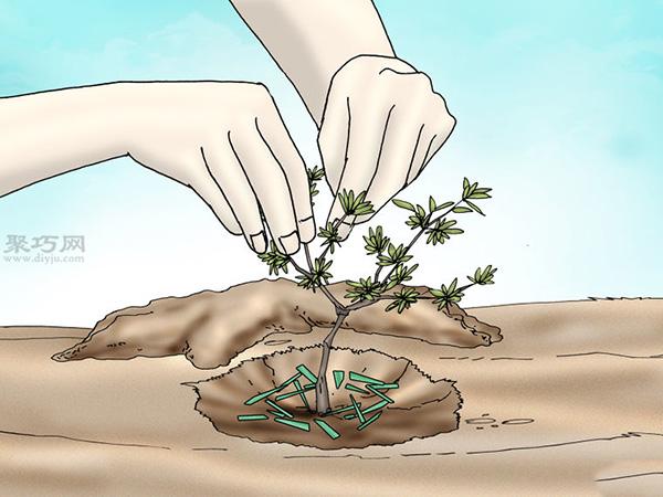 栽种杜鹃花教程图解 7