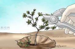 栽种杜鹃花教程图解 怎样栽种杜鹃花