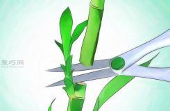 怎么样养护富贵竹 栽种富贵竹教程图解