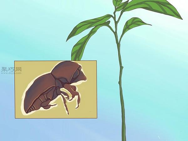 栽种鳄梨步骤 20