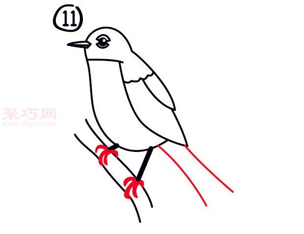 罗宾鸟简笔画第11步