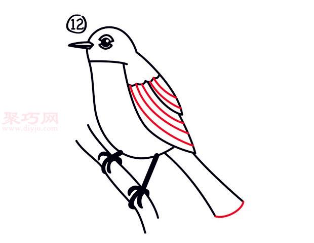 罗宾鸟简笔画第12步