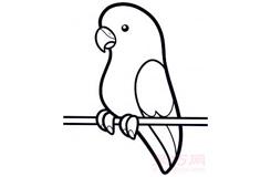 儿童简笔画长尾鹦鹉的画法 教你如何画长尾鹦鹉简笔画