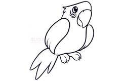 儿童简笔画鹦鹉的画法 教你如何画鹦鹉简笔画