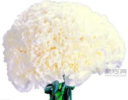 粉色康乃馨花语:祝母亲永远年轻、美丽