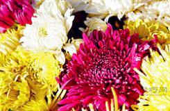 1枝-999枝玫瑰花花语 玫瑰花不同的支数代表什么意思?