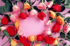 玫瑰花语大全 不同颜色玫瑰花花语是什么?