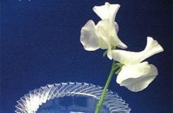 如何用饮料瓶做花瓶 塑料瓶变废为宝DIY花瓶