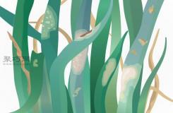 如何预防洋葱生病 种植洋葱病虫害类型及防治措施