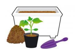 盆栽黄瓜育苗初期的注意事项 黄瓜苗种植方法