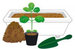 毛豆种植新手必备 大豆种子和豆苗的选择技巧