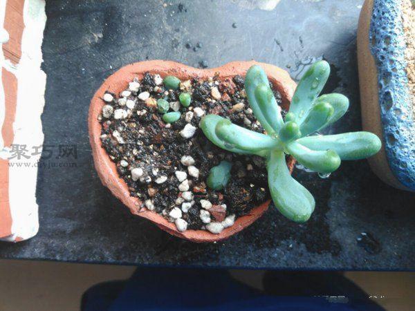 果冻壳制作创意小花盆