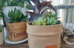 DIY花盆教程 教你如何用塑料油桶变废为宝手工制作花盆