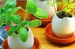 鸡蛋壳手工制作成花盆 培育花草种子