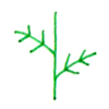 光杆的叶子画法