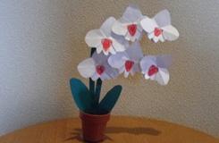 教你如何折纸花:蝴蝶兰折纸图解