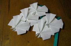 简单折纸蝴蝶兰方法图解 折纸蝴蝶兰花
